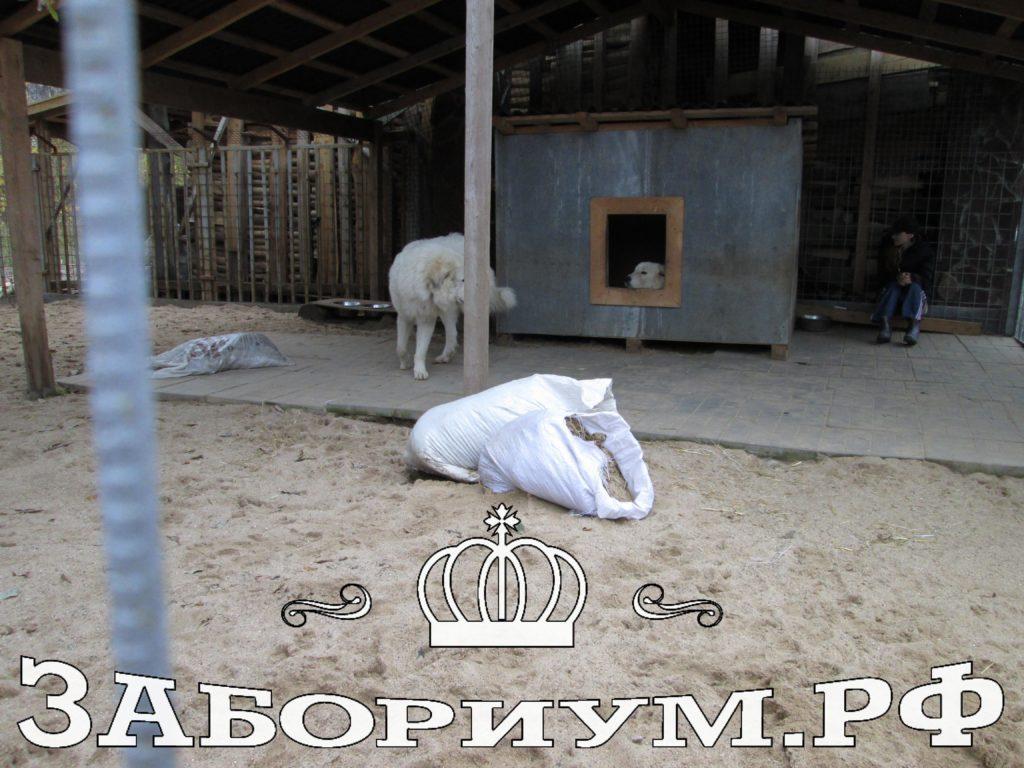 Строительство загона для собак из секций в г. Александров