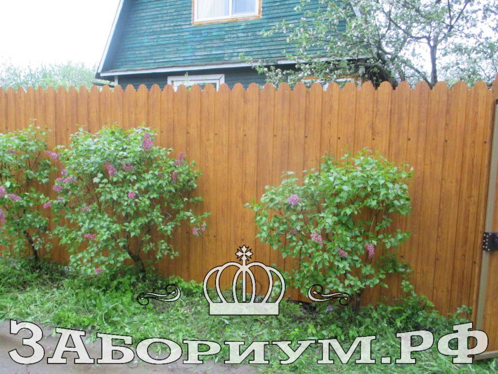 Забор из фигурного профнастила цвет под дерево (золотой дуб) в г. Конаково